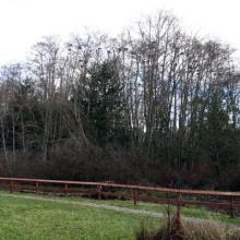 Shore Woods Mitigation Area